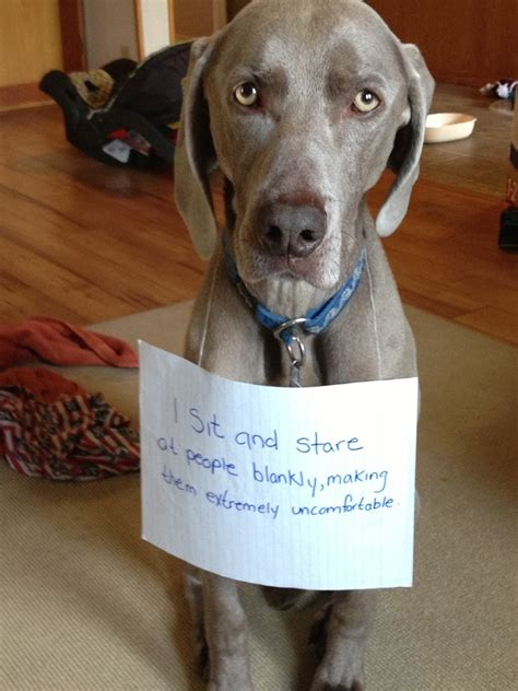 Dog Shaming Collection ~ Silly Bunt Funny